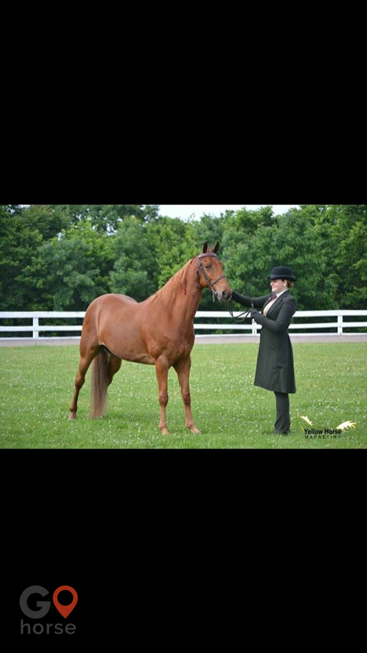 TreeTop  Stables Horse stables in Crittenden KY 15