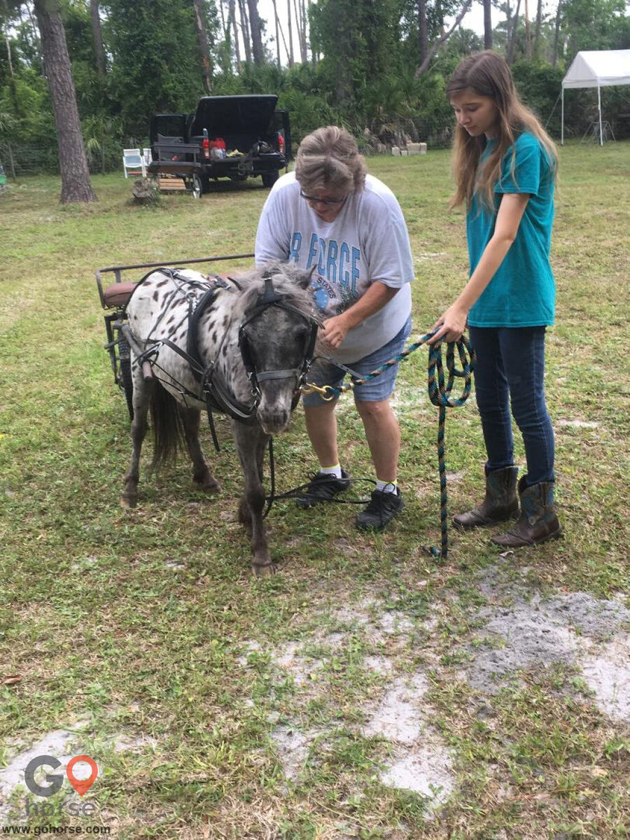 South Mountain Girls Ranch Horse stables in New Smyrna Beach FL 2