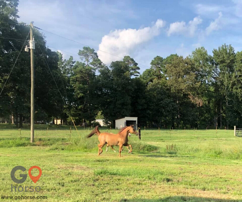 CB Performance Horse Horse stables in Alexander AR 4
