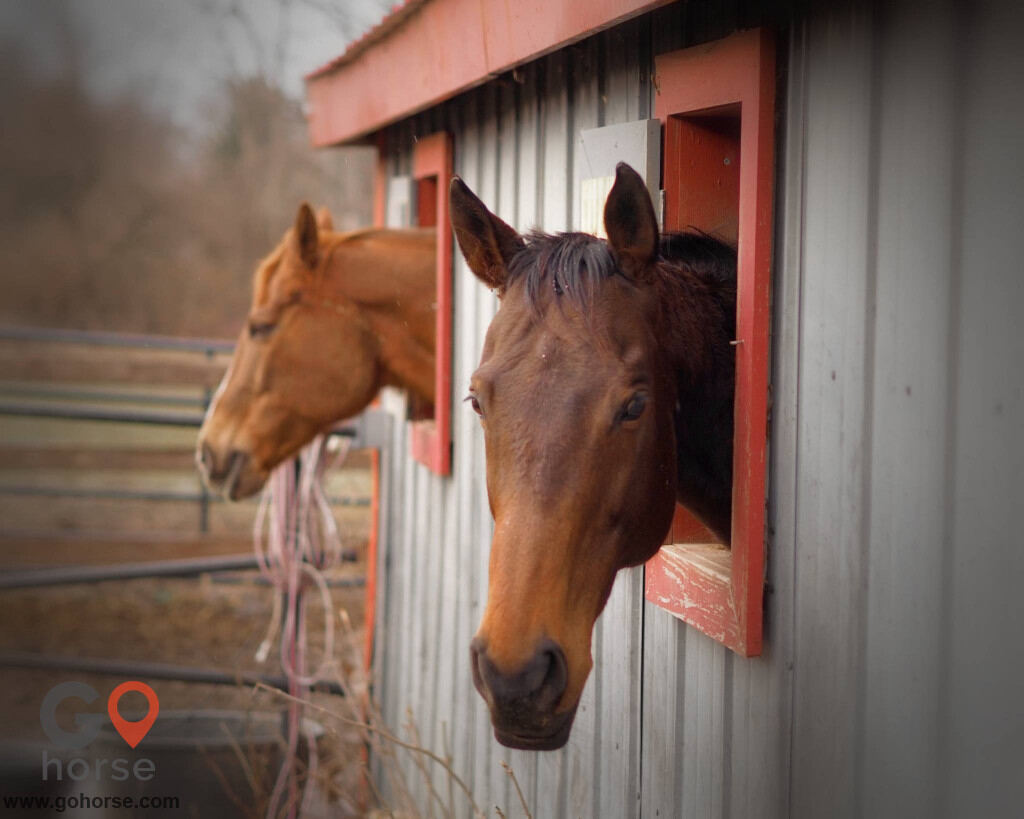 Southport Equestrian Center Horse stables in Indianapolis IN 8