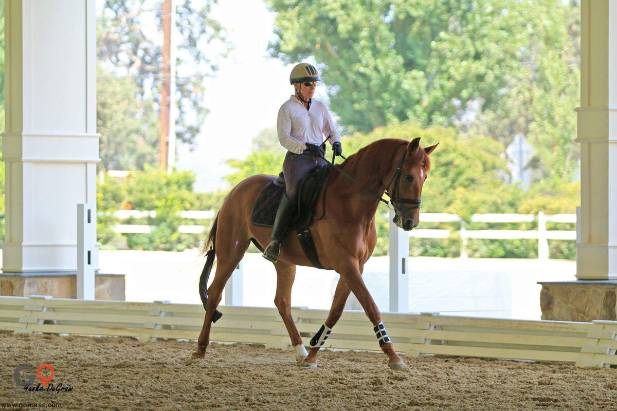 Pacific Dressage, LLC Horse stables in Lake View Terrace CA 7
