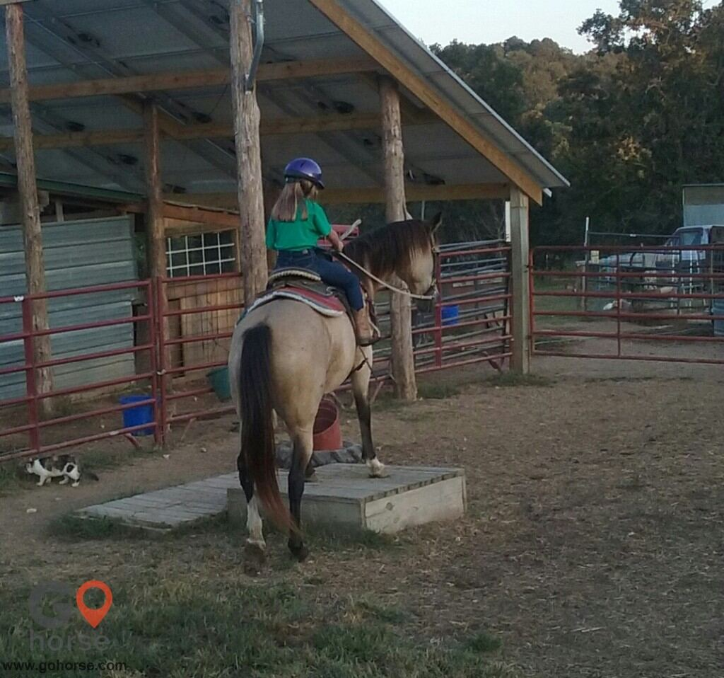 Rocky Top Riding Club Horse stables in Eureka Springs AR 2