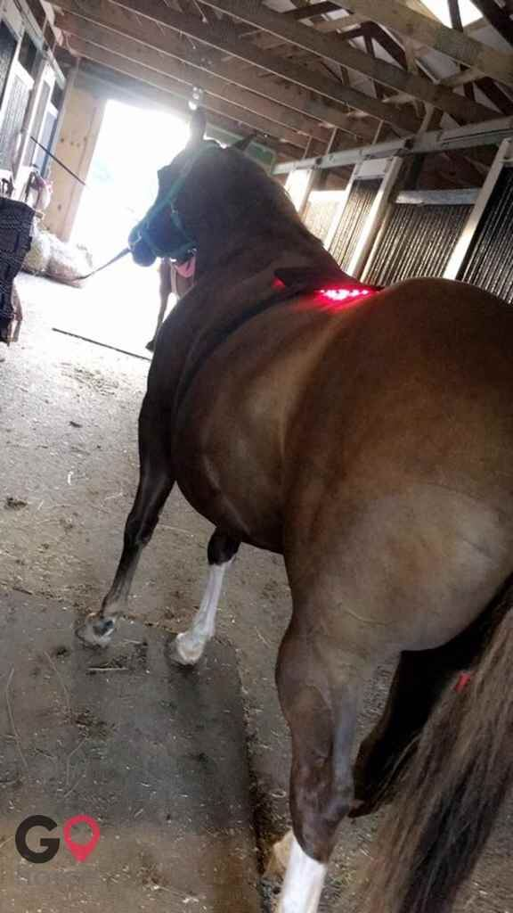 Top Line Stables, LLC Horse stables in Atglen PA 2