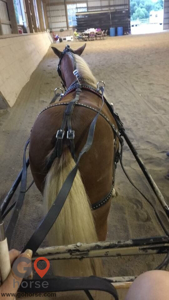 Top Line Stables, LLC Horse stables in Atglen PA 6