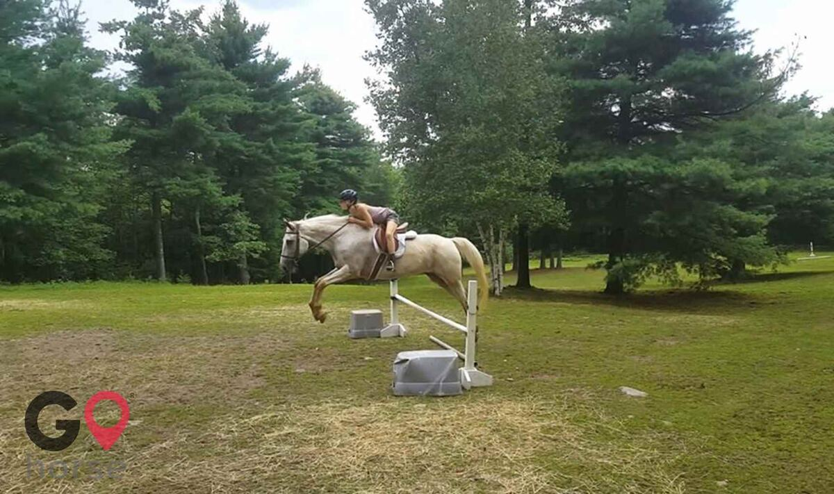 Timber Creek Stables Farrier in Cresco PA 7