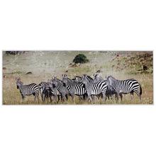 _TELA IMPRESSA AFRICA ZEBRASFULLWAY 70x195x4cm