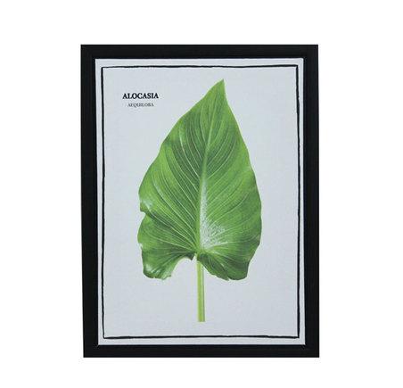 tela impressa c/ mol folhasalocasia 40x30x2,5cm
