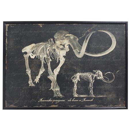-quadro esqueleto de mamute 80x120x3cm