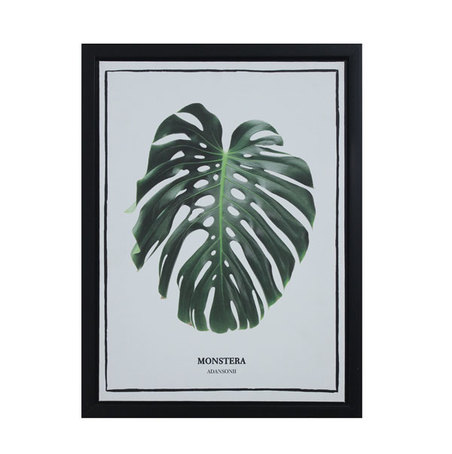 tela impressa c/ mol folhasadansonii  40x30x2,5cm