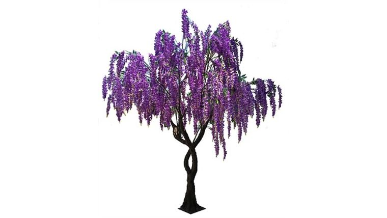12 Ft Purple Wisteria Tree Rentals Online 300 Day