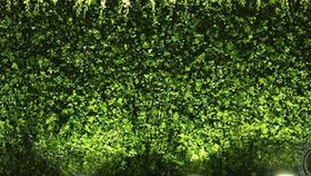 Image of a 8'ft x 4'ft Hedge Panel