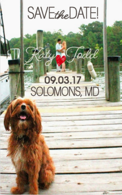 dogs save the dates. Maryland Wedding.