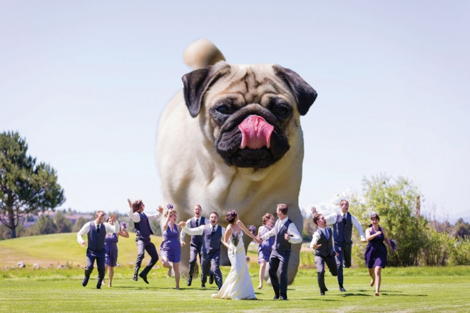 giant dog wedding photo