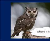 BrainVentures Owls K-2
