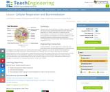Cellular Respiration and Bioremediation