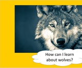 BrainVentures Wolves