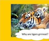 BrainVentures Tigers