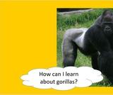 BrainVentures Gorillas