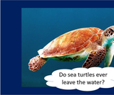 BrainVentures Sea Turtles