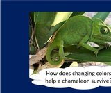 BrainVentures Chameleons