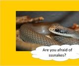BrainVentures Snakes