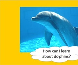 BrainVentures Dolphins