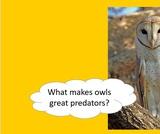 BrainVentures Owls 3-5