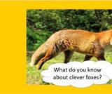 BrainVentures Foxes