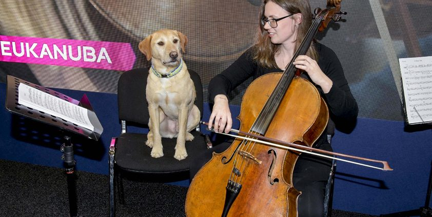 PR Case Study: Speed - Pitch Perfect for Pawchestra
