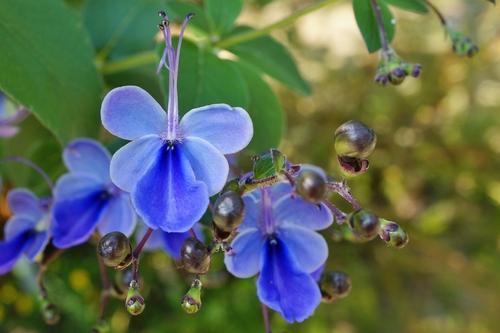 How to get more summer colour in the garden - The English Garden