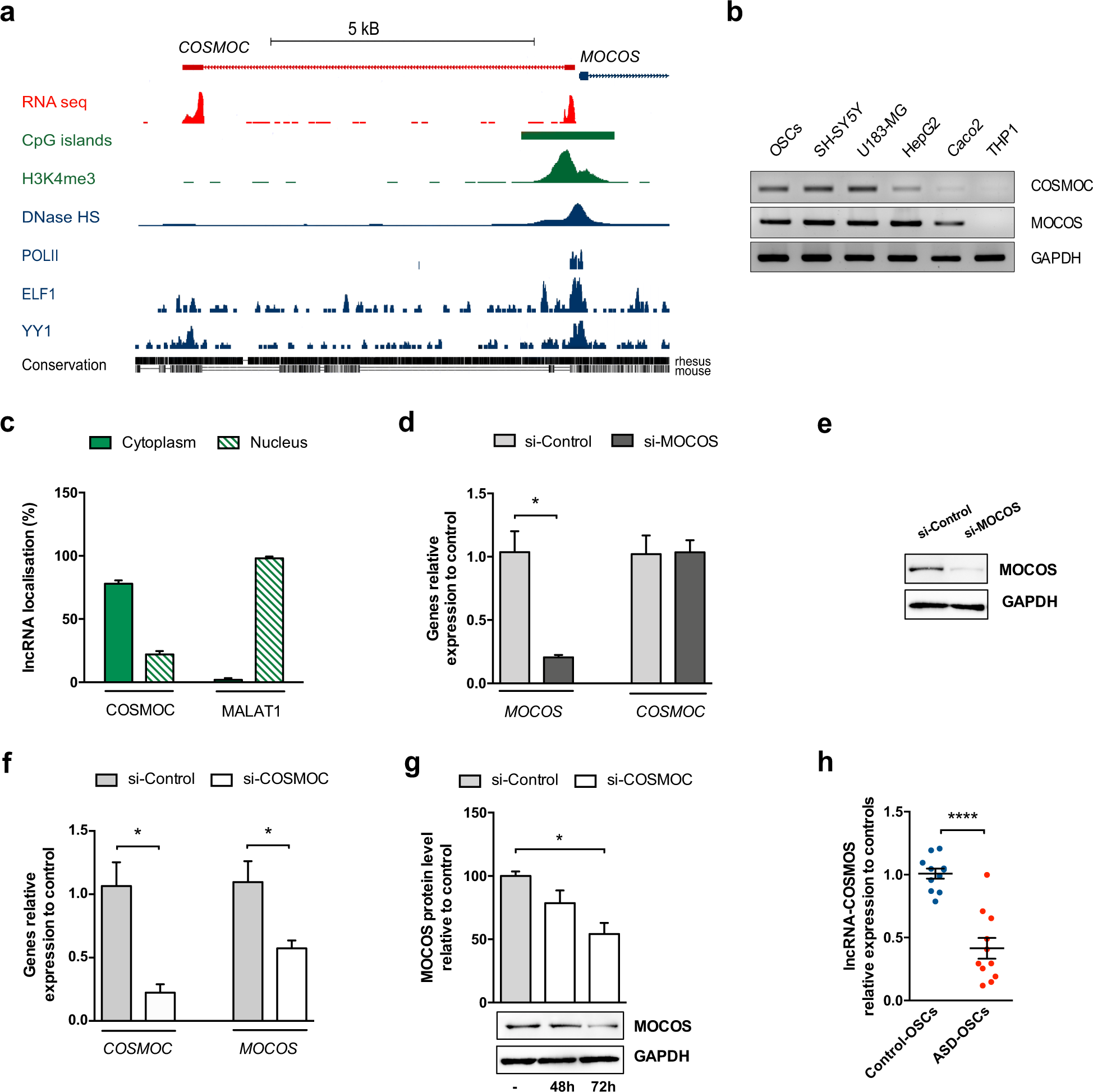 Impaired expression of the COSMOC/MOCOS gene unit in ASD patient stem cells