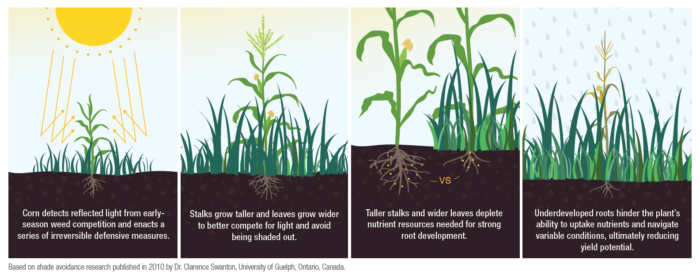 Overcome Early-Season Obstacles that Impact Yield