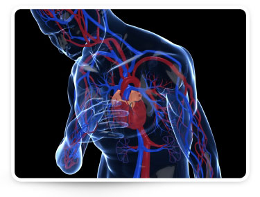 Causes and Symptoms of High Blood Pressure (Hypertension)