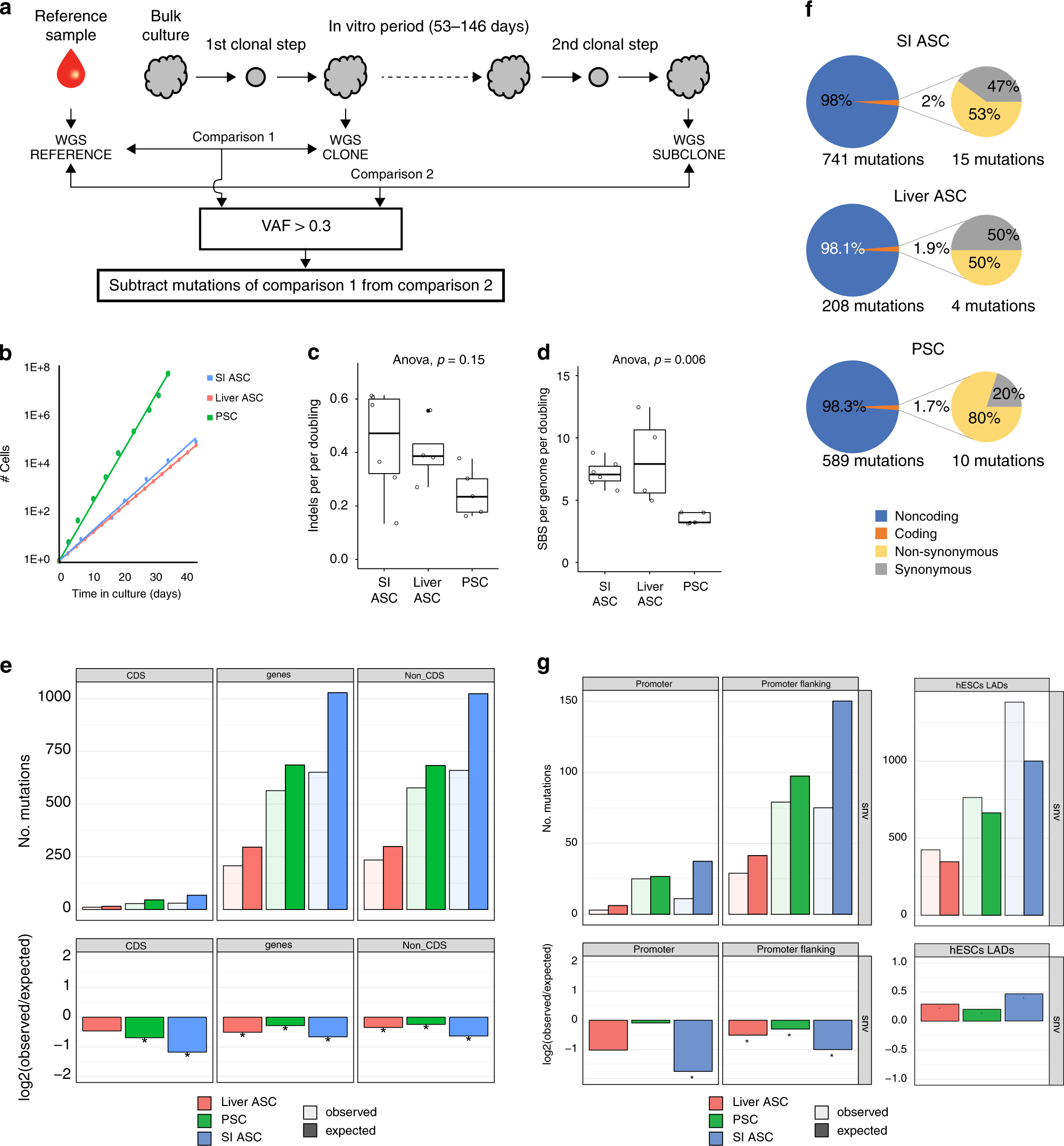 The mutational impact of culturing human pluripotent and adult stem cells
