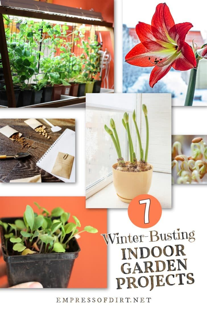 7 Winter-Busting Indoor Garden Projects to Lift Your Mood