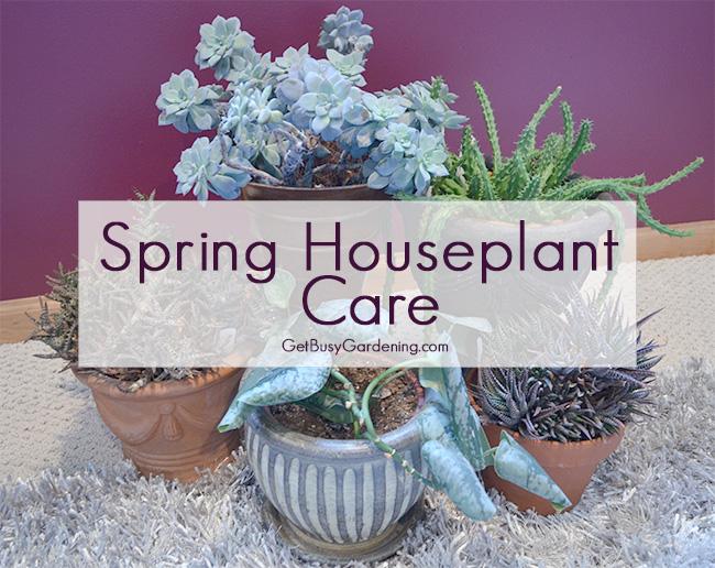 Spring Houseplant Care