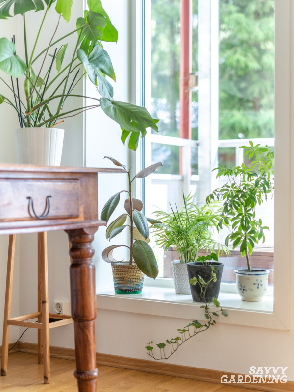Starting an indoor garden: light, humidity, and other factors to keep in mind