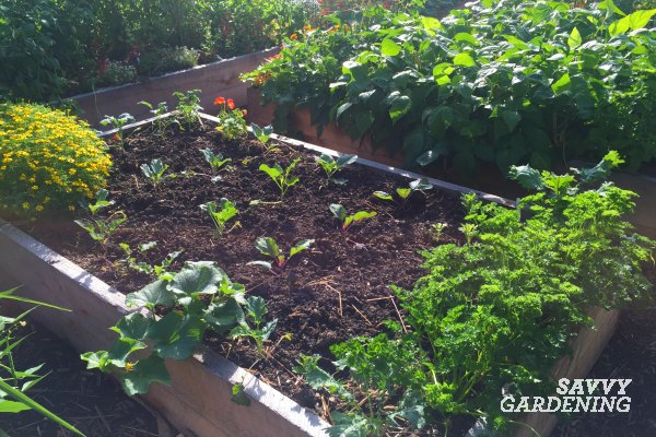 4 vegetable gardening facts you need to know