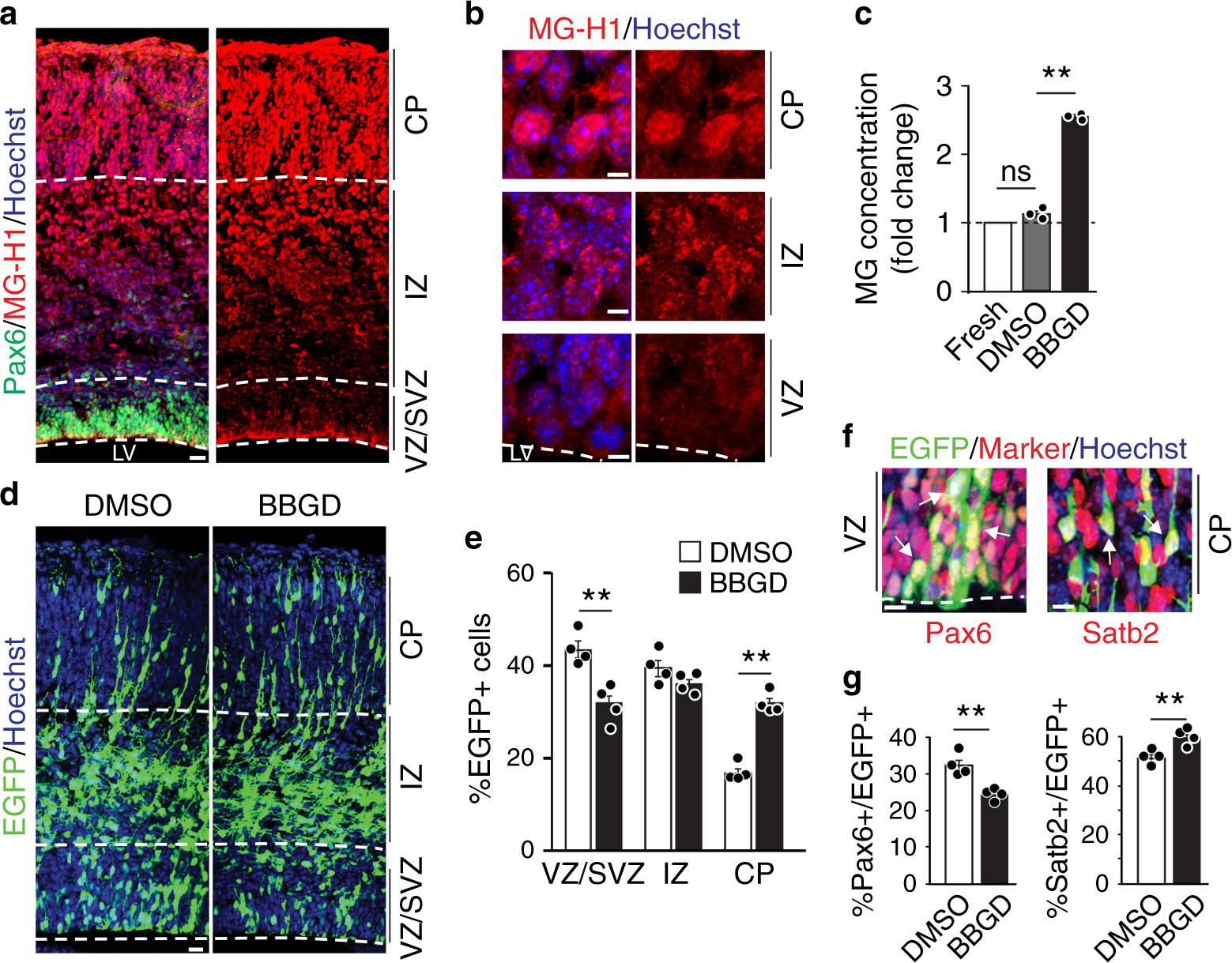 Methylglyoxal couples metabolic and translational control of Notch signalling in mammalian neural stem cells