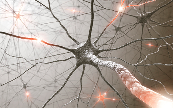 Human Brain Cells Restore Myelin and Motor Function in Mouse Multiple Sclerosis Model