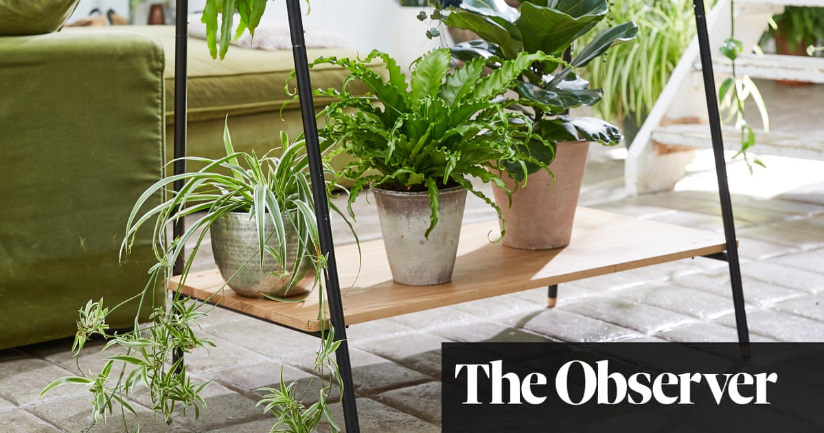 Do houseplants really improve air quality?