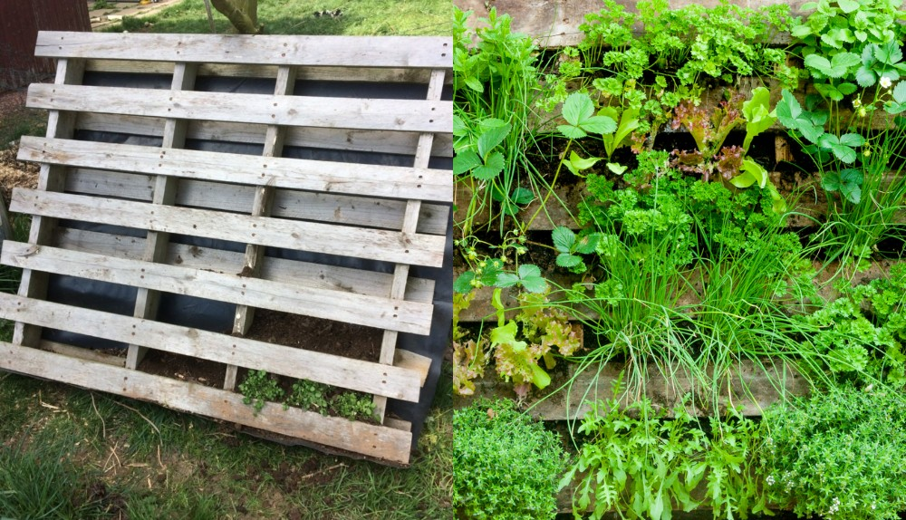 How To Make A Wooden Pallet Vertical Garden