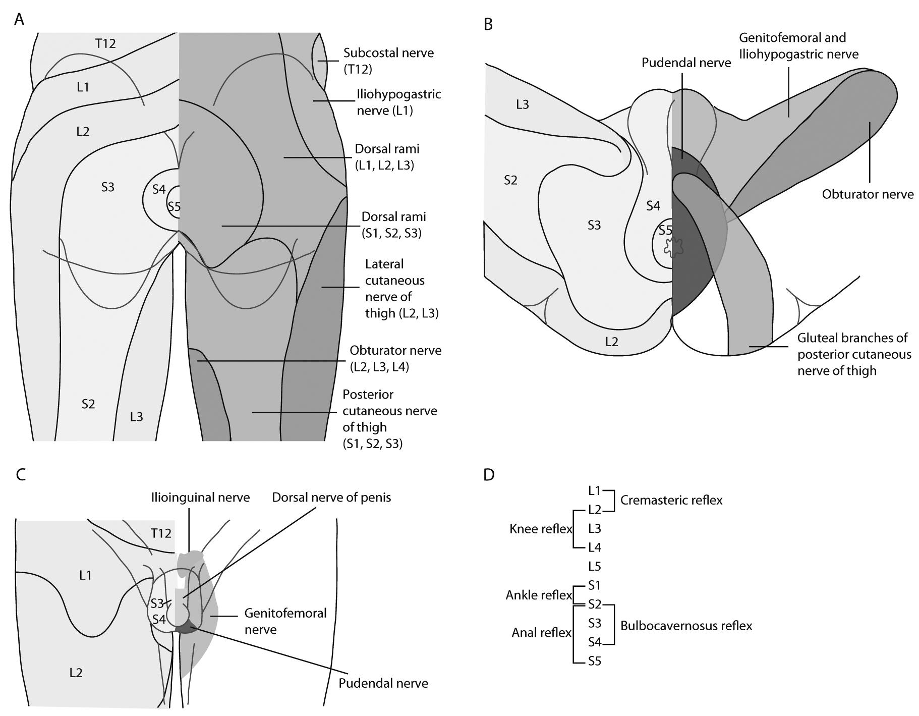 EAU Guidelines: Neuro-Urology | Uroweb Urology of Virginia