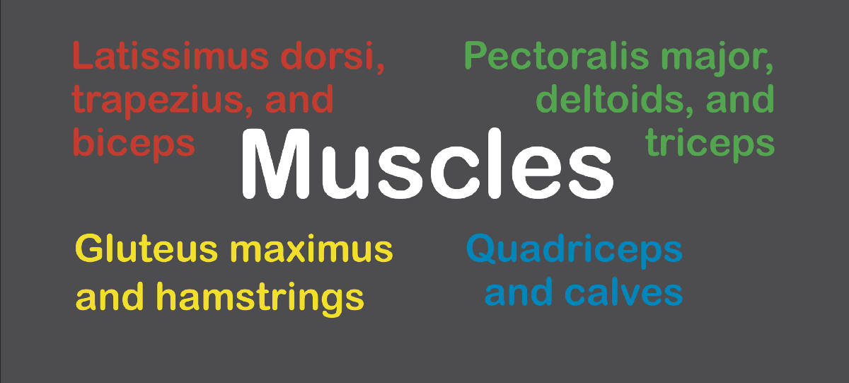 How can we identify the best way to train each muscle?