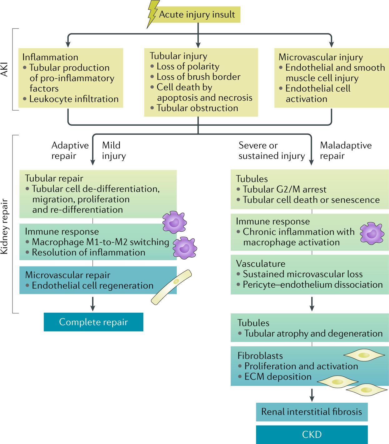 epigenetic bladder health diet