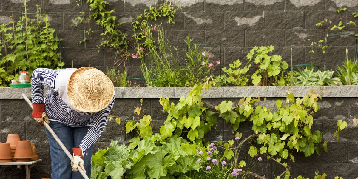 How Quarantine Taught Me to Love Gardening