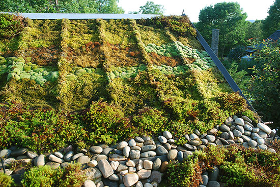 5 Environmental Benefits Of Moss Gardening Blog Air Conditioning And