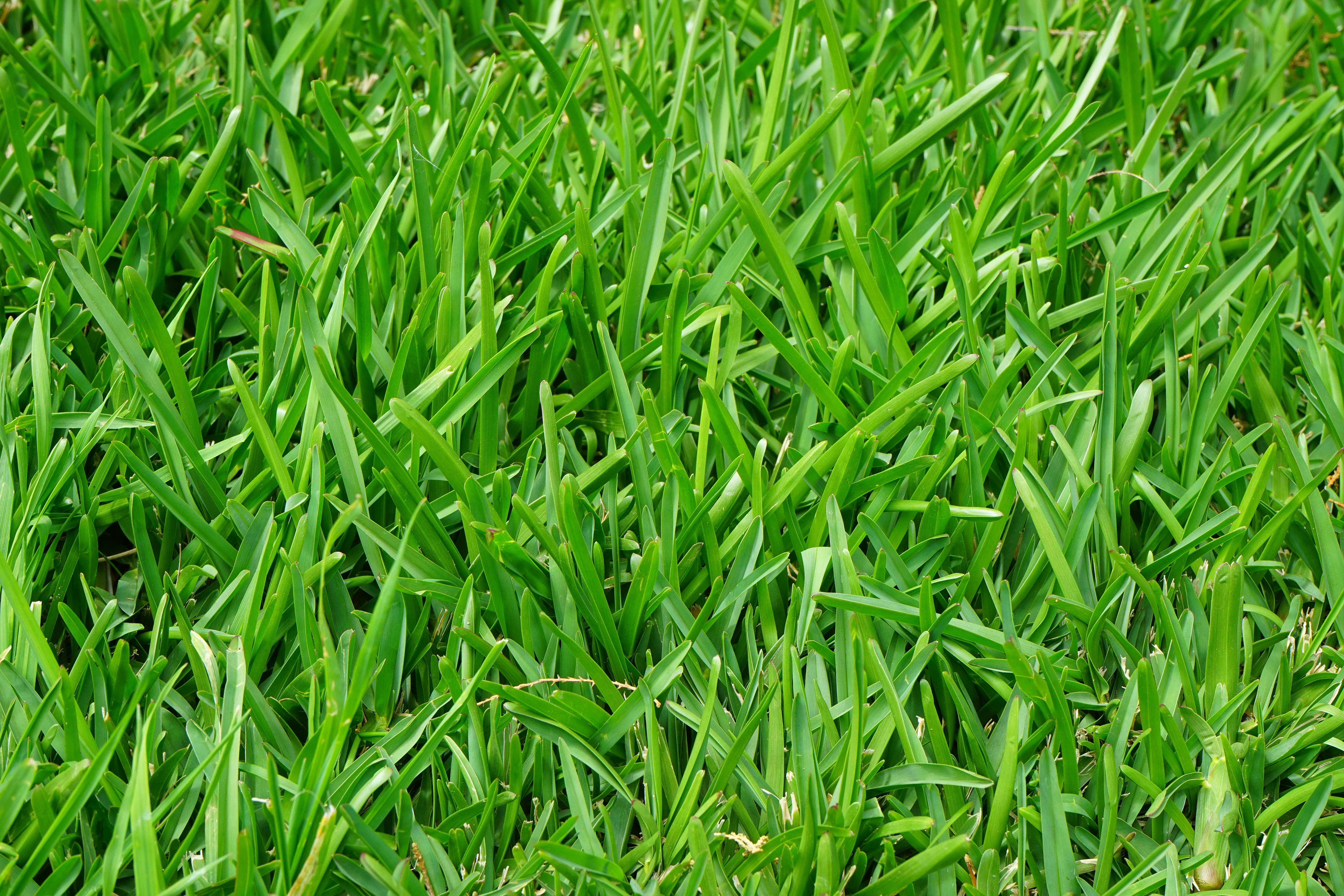 Why fall is the best time for seeding cool-season grasses
