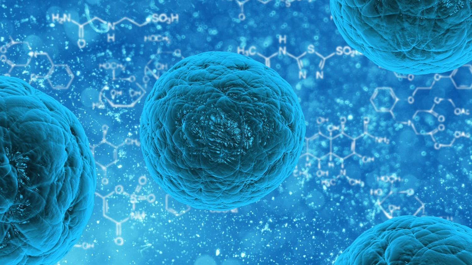 Fat cell hormone boosts potential of stem cell therapy