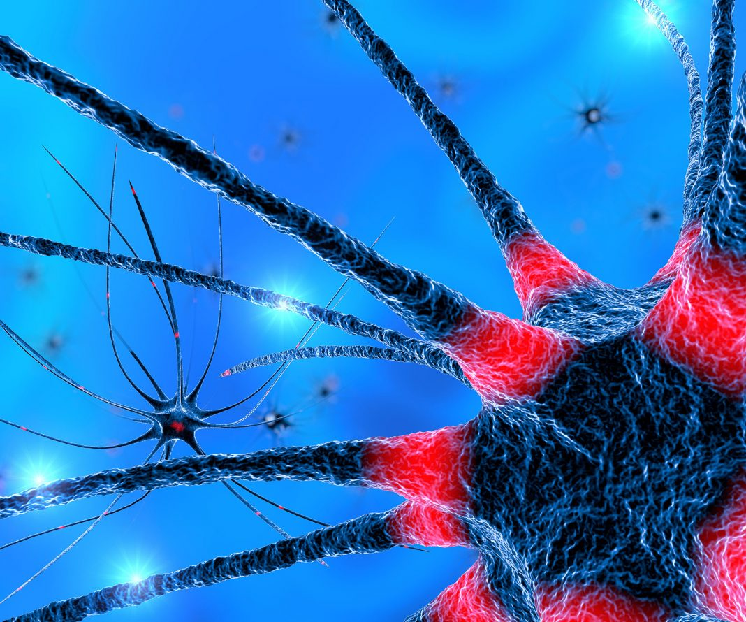 Axon Regeneration Seen for Optic Nerve and Spinal Cord Injuries